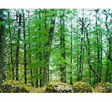 Forest green with rocks and drops of water Photographic Print