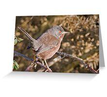 Dartford Warbler Greeting Card