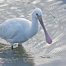 Spoonbill by Alan Forder