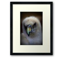 Portrait of a Griffon Vulture Framed Print
