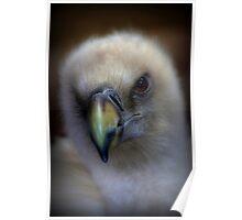 Portrait of a Griffon Vulture Poster