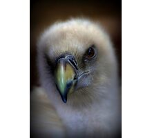 Portrait of a Griffon Vulture Photographic Print