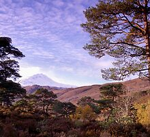 Caledonian Pines in Glen Affric, Scotland (cropped to suit cards) by Kevin Allan