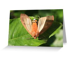 Moth on a Leaf Greeting Card