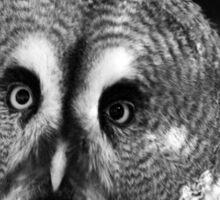 Friend Owl Sticker