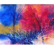 Colori nel bosco Photographic Print