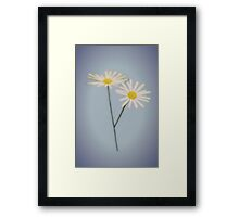 Daisy Daydreams Framed Print