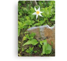 Avalanche Lily Canvas Print