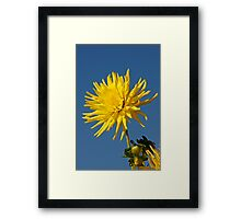Big Beautiful Yellow Flower Framed Print