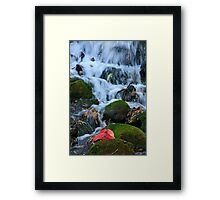 Little Waterfall and Leaf Framed Print