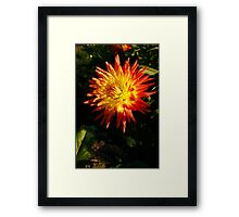 Multi Colored Flower Framed Print