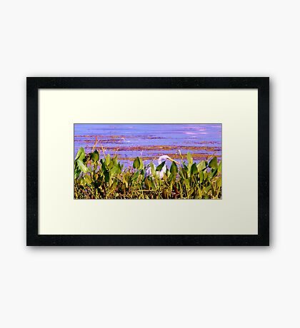 Beak Amongst the Reeds Artistic Photograph by Shannon Sears Framed Print