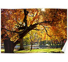 Autumn Gold Poster