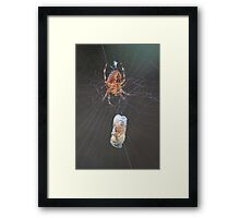 Spiders aren't so bad now that they eat bees Framed Print