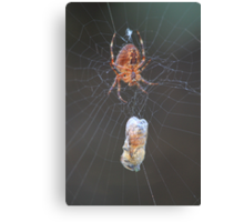 Spiders aren't so bad now that they eat bees Canvas Print