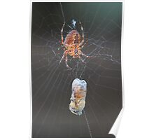 Spiders aren't so bad now that they eat bees Poster