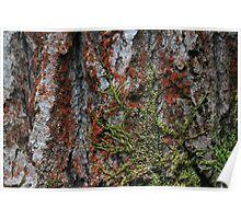 Moss on A Douglas Fir  Poster