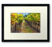 Vineyard Light Framed Print