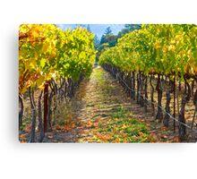 Vineyard Light Canvas Print
