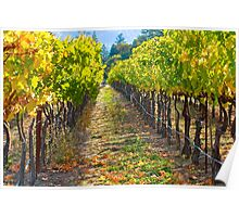 Vineyard Light Poster