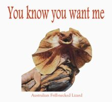 Australian Frilled-neck Lizard by Just Aussie