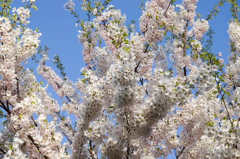 Sakura Cherry - Chaotic Spring Abundance by Georgia Mizuleva