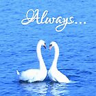 Always: Swans in Love by Susan Wellington