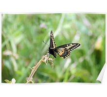 Black Orange and White Butterfly Poster