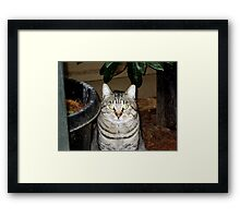 Tiger--In All His Glory Framed Print