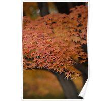 Color me Autumn Poster