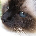 Miss Birman by BekJoy