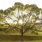 THE LONELY TREE by parisiansamurai