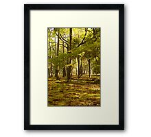the golden forest (autumn in japan) Framed Print