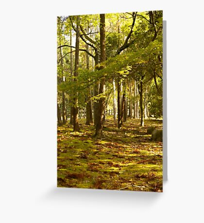 the golden forest (autumn in japan) Greeting Card