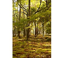 the golden forest (autumn in japan) Photographic Print