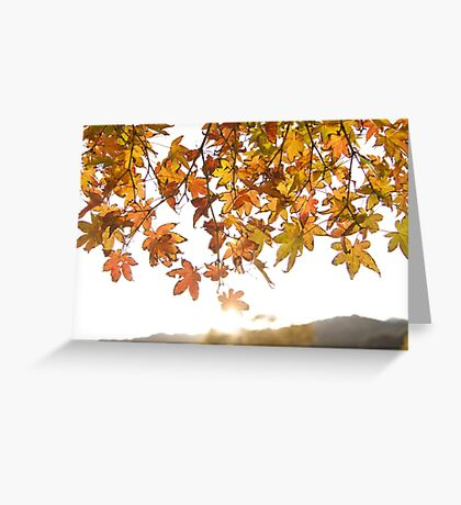 sunrise through the leaves of Momiji (autumn in Japan) Greeting Card