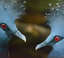 Close Up of Two Birds in Bristol Zoo by JackDowling
