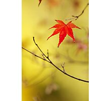 just one red momiji leaf Photographic Print
