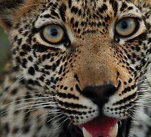 Handsome hunter by Dan MacKenzie