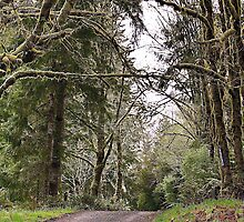 Back Roads of Siletz, Oregon by Cee Neuner