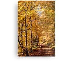 Autumn colors, riverside walk, November 2103  Metal Print