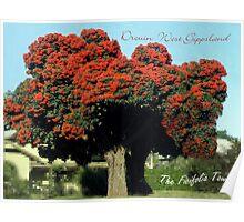 Red Ficifolia on Princes Way, Drouin  Poster