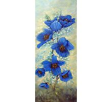 Blue Poppies Photographic Print
