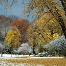 Late Fall, Early (Snow) Fall! by Billlee