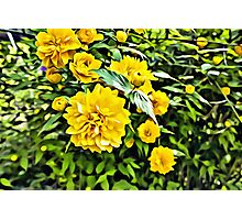Yellow Flowers Linen / Canvas Digital Painting Photographic Print