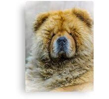 Chow portrait Canvas Print