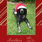 Christmas Card 22 by Australian Brittanys