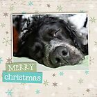 Christmas Card 23 by Australian Brittanys