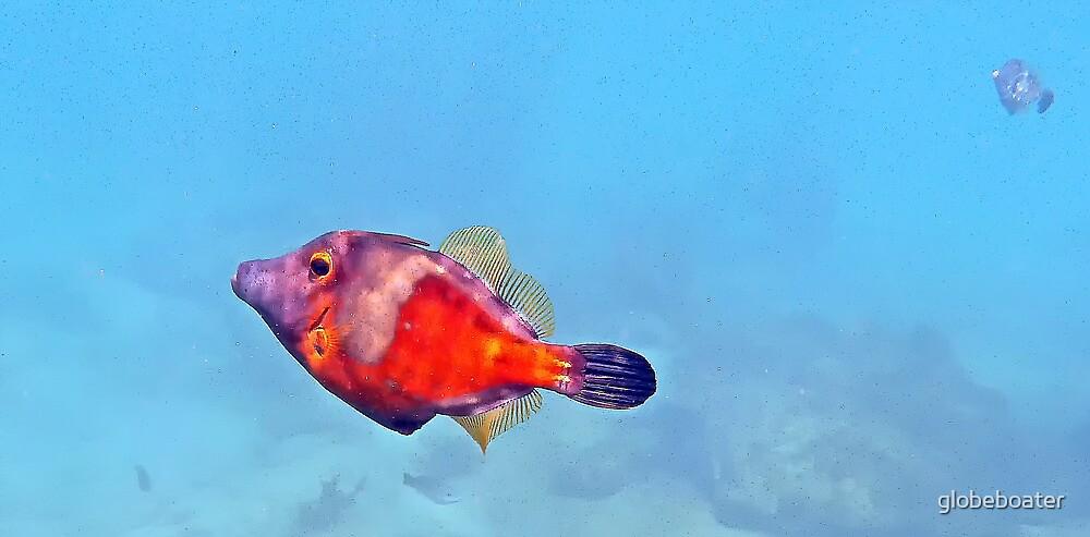 colorful marine jewel (orange tail filefish) by globeboater