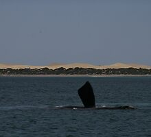 Goodbye, whales Fowler's Bay, South Australia. by elphonline